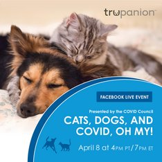 Facebook Live | COVID-19 Council for Animal Health