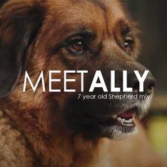 Pet Owner Testimonial: Ally's Story