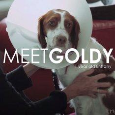 Pet Owner Testimonial: Goldy's Story