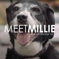 Pet Owner Testimonial: Millie's Story