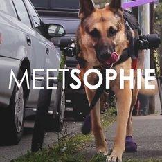Pet Owner Testimonial: Sophie's Story