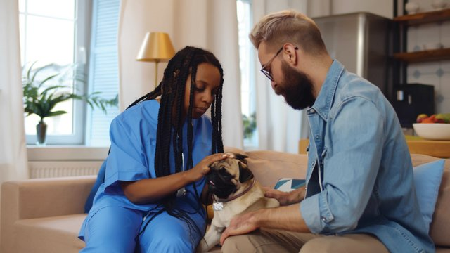 Millions (literally!) of Ways to Love Your Veterinary Team this Veterinary Appreciation Day
